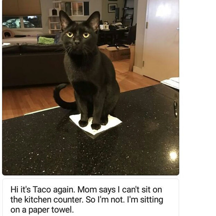 funny-cat-shaming-23
