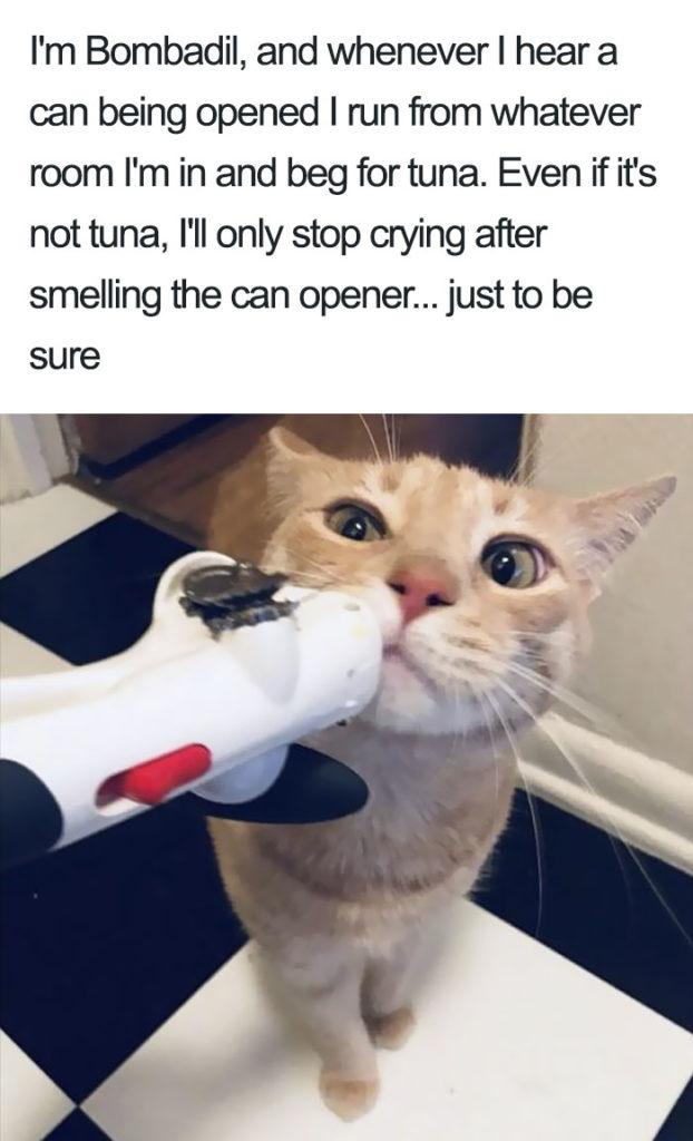 funny-cat-shaming-33