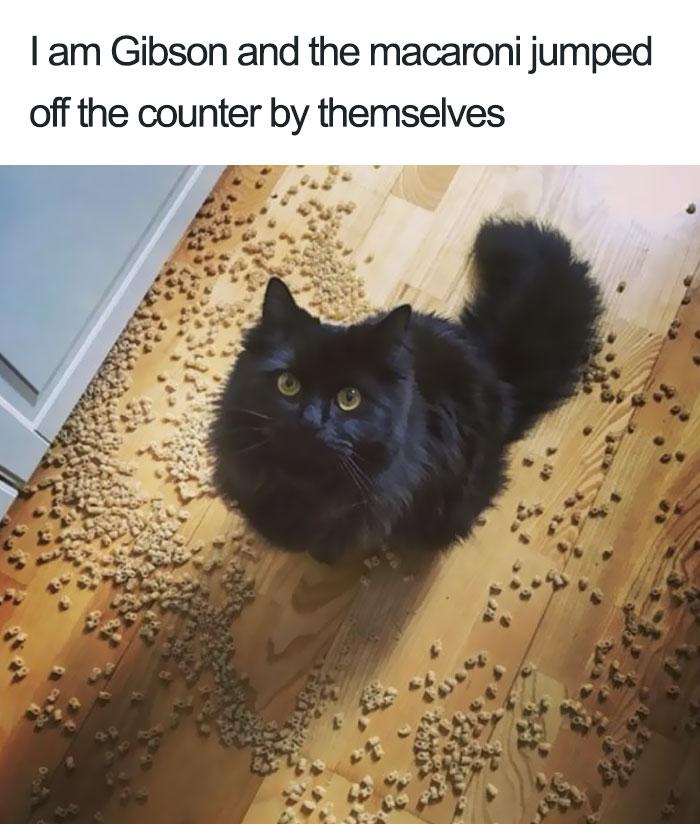 funny-cat-shaming-35