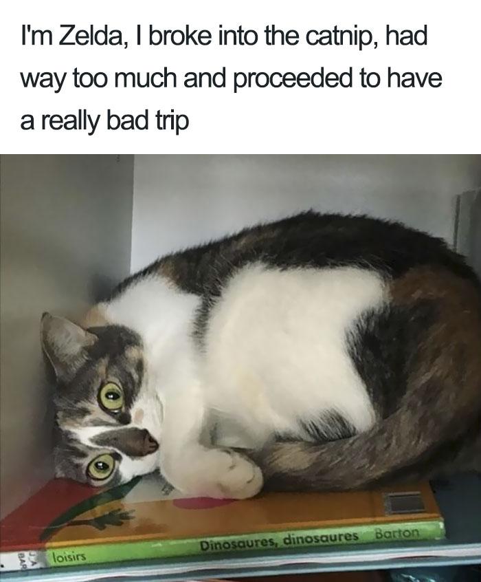 funny-cat-shaming-5