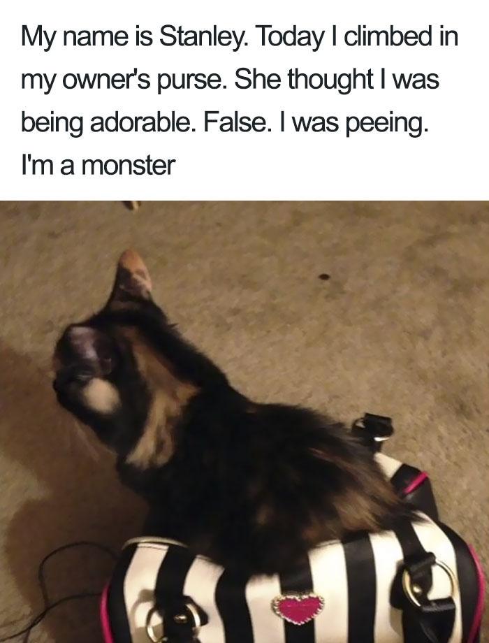 funny-cat-shaming-8