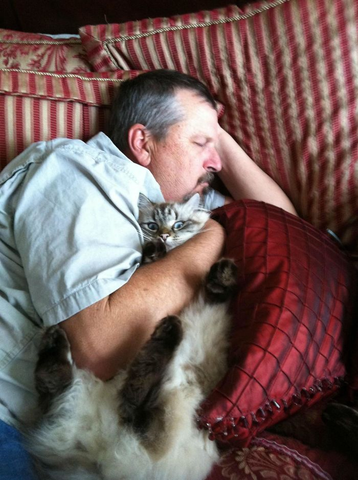 people-who-didnt-want-cats-15