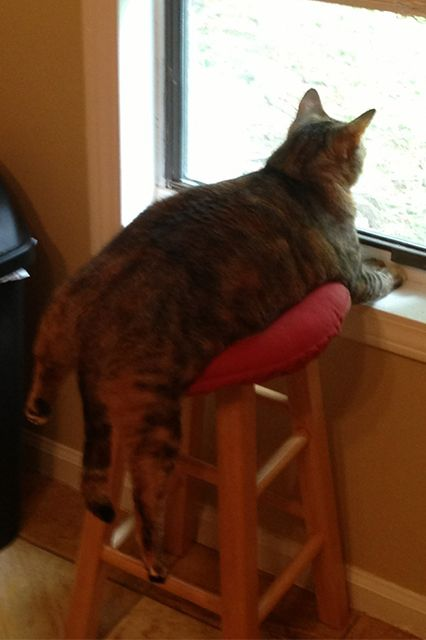 cat-truths-08