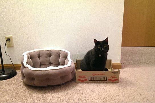 cat-truths-10