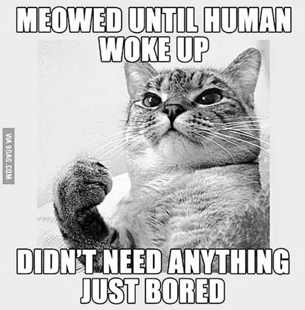 cat-truths-17