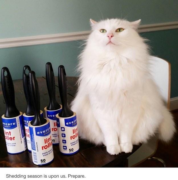 cat-truths-20
