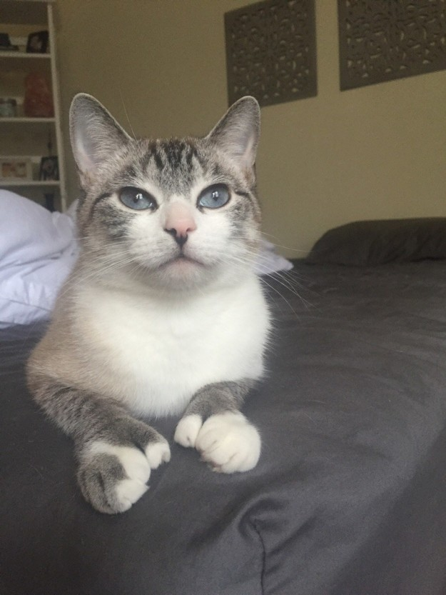 polydactyl-cats-06
