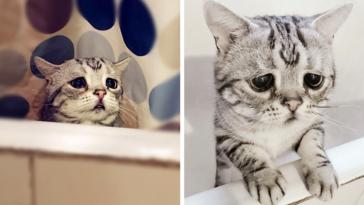 Featured-Saddest-Cat-FB