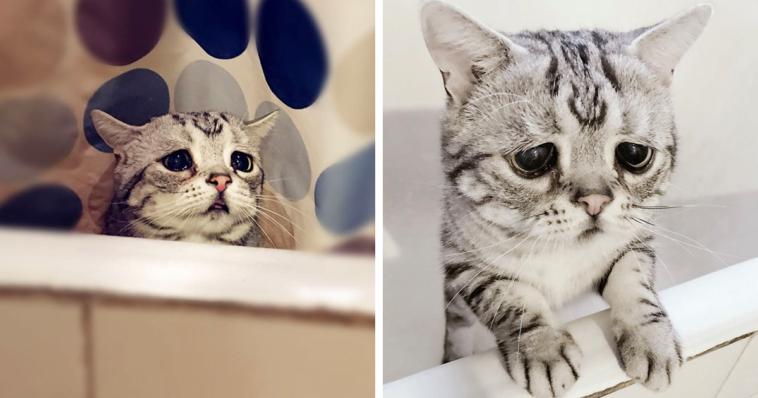 Featured-Saddest-Cat-FB