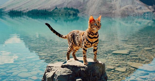Featured-Suki-Travel-Cat-FB
