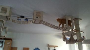 Featured-cat-jungles-FB
