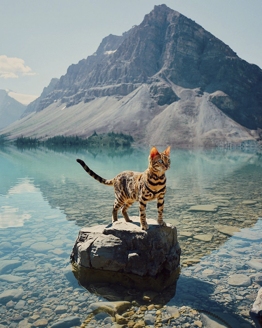 adventures-suki-the-cat-canada-1