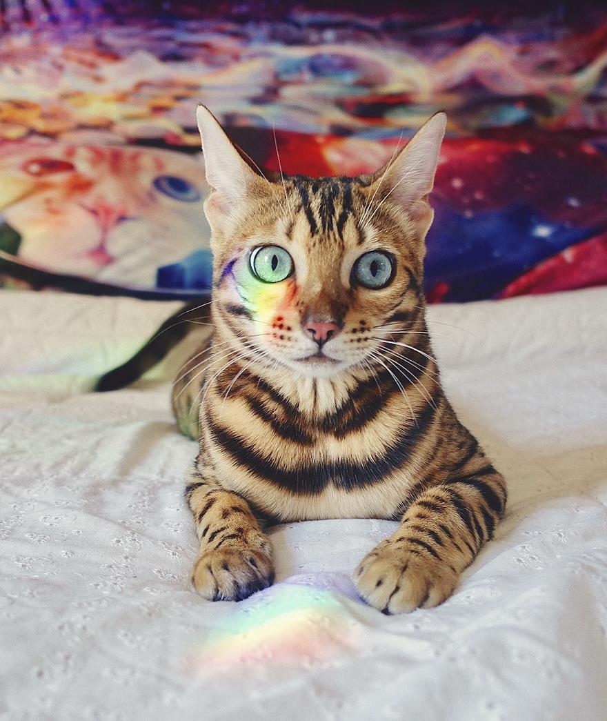 adventures-suki-the-cat-canada-14