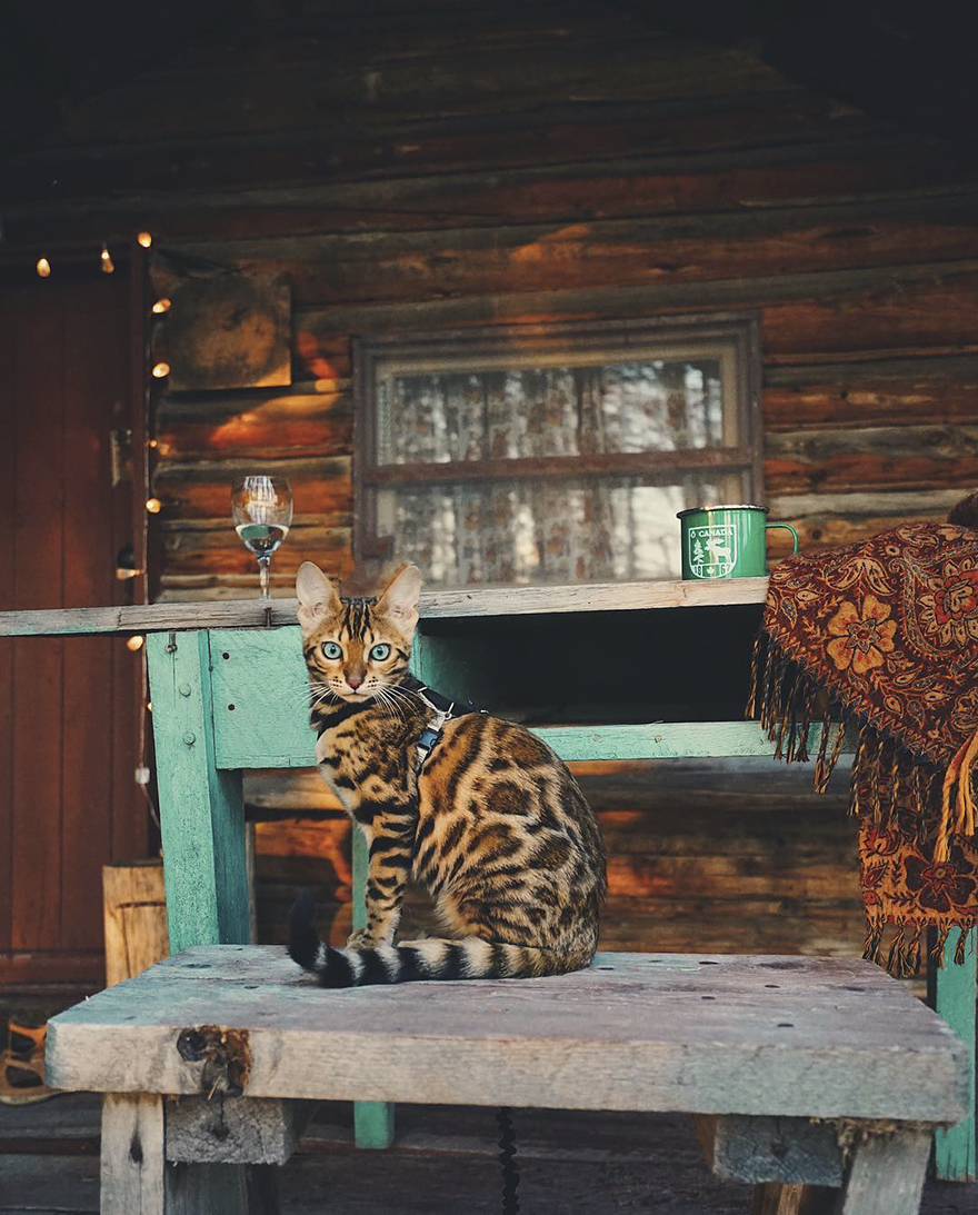 adventures-suki-the-cat-canada-17