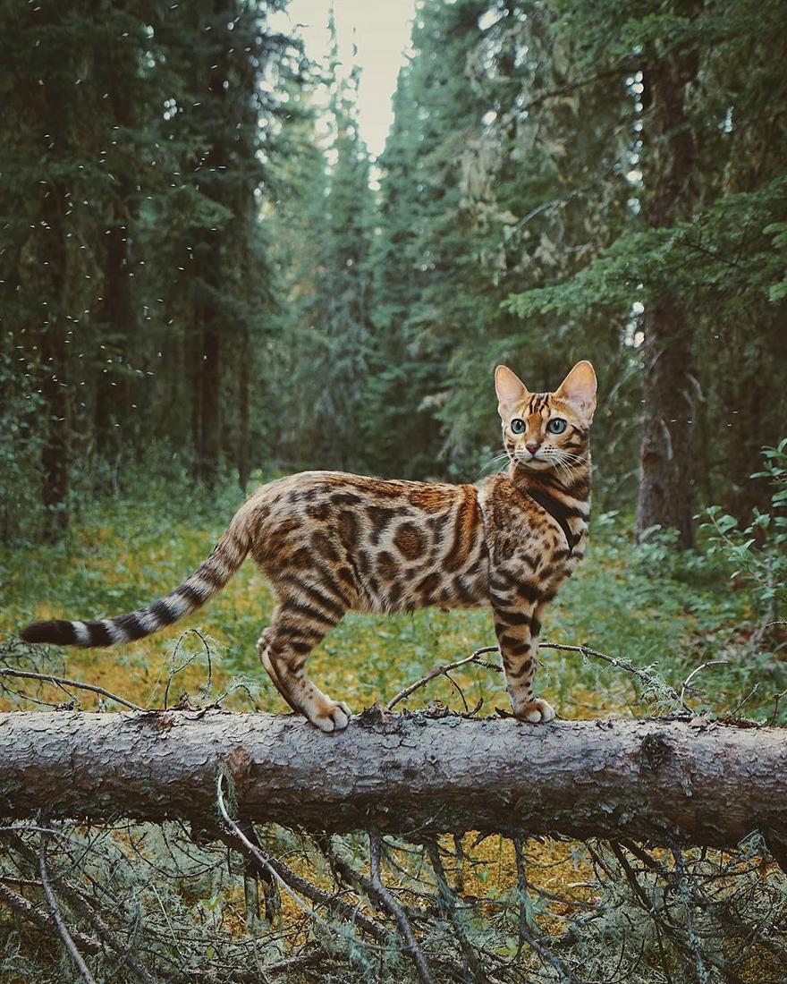 adventures-suki-the-cat-canada-19