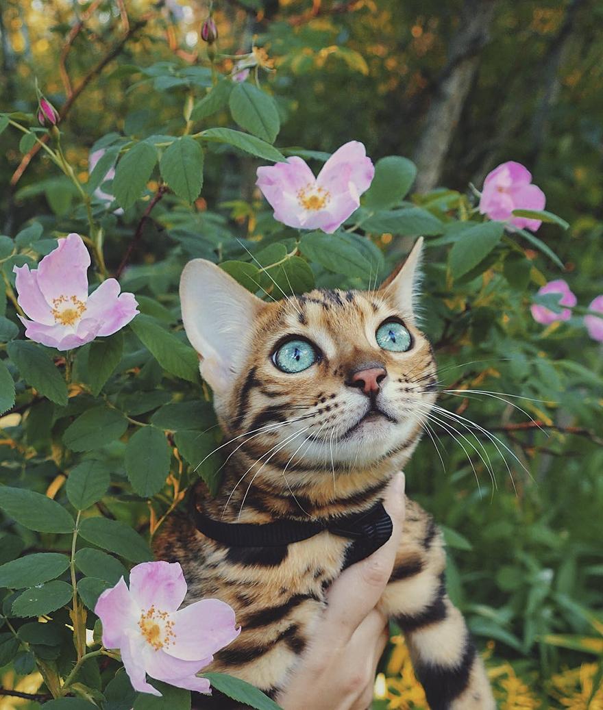 adventures-suki-the-cat-canada-20
