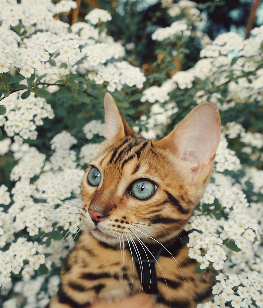 adventures-suki-the-cat-canada-21