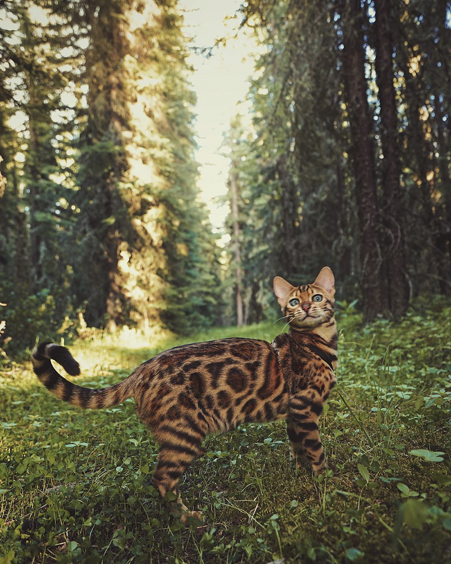adventures-suki-the-cat-canada-23