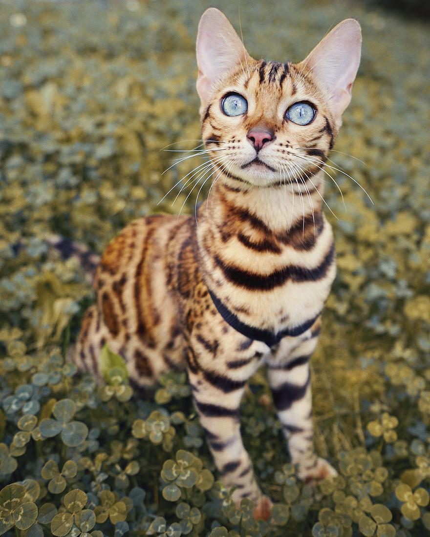 adventures-suki-the-cat-canada-25