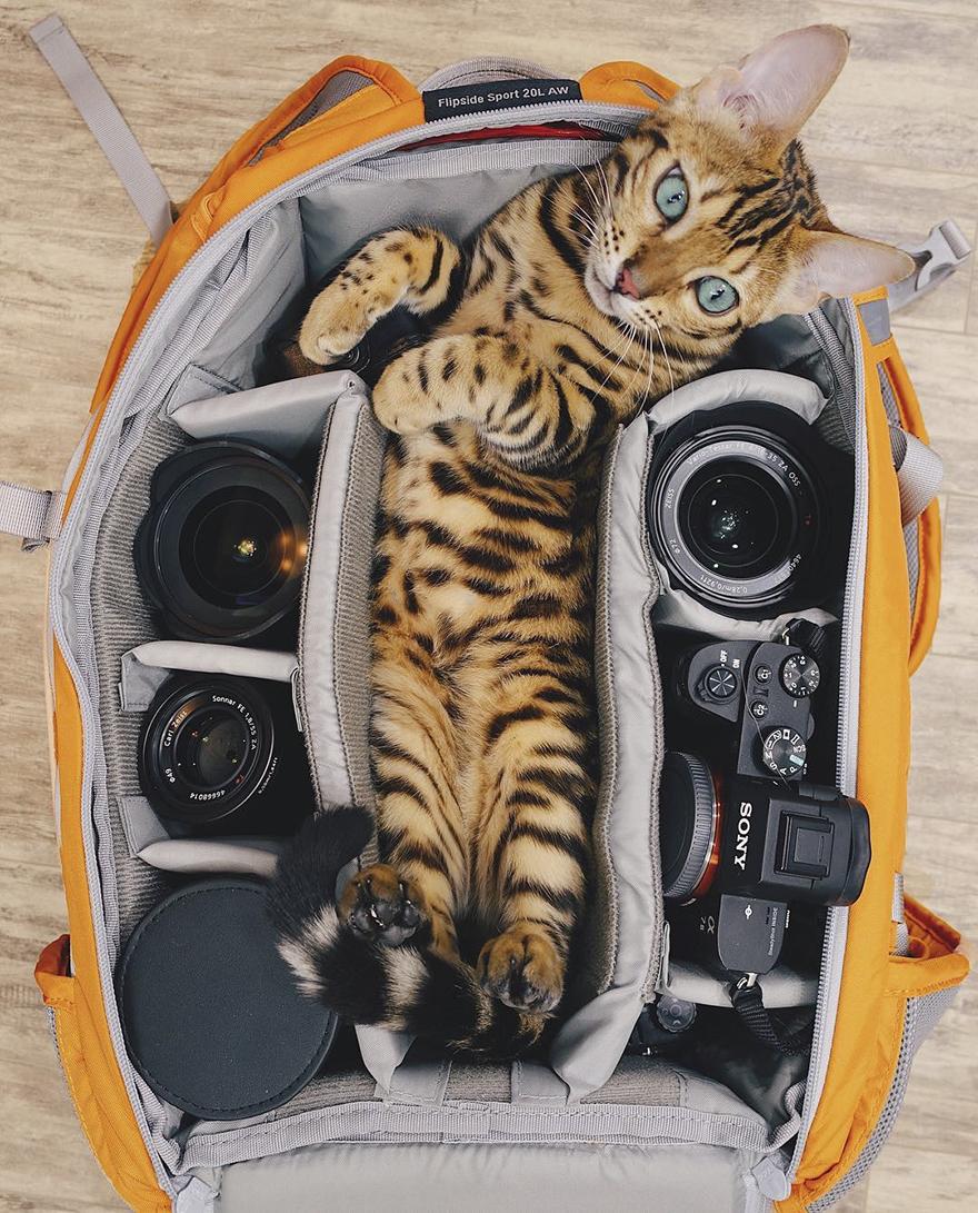 adventures-suki-the-cat-canada-5