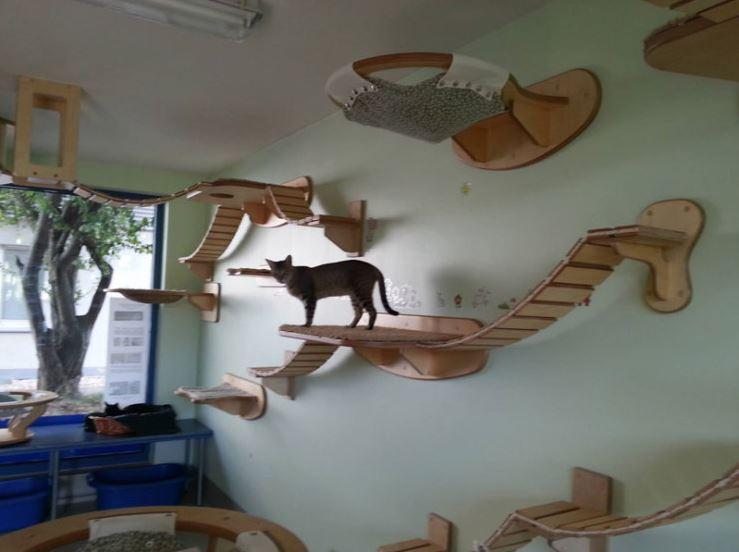 cat-jungles-10