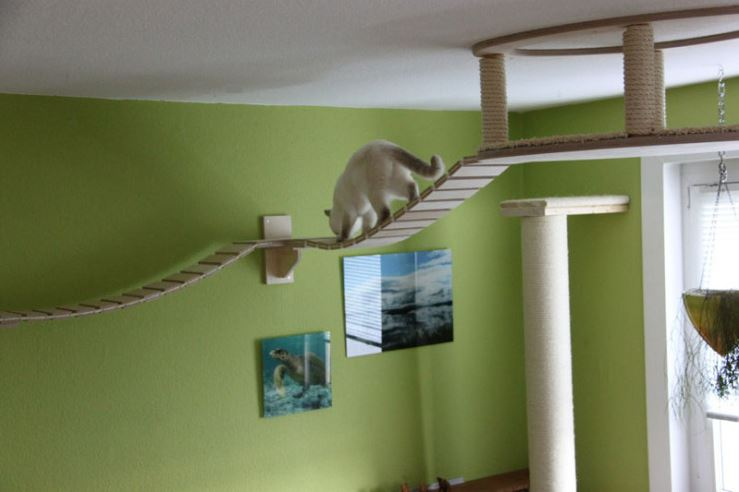 cat-jungles-4
