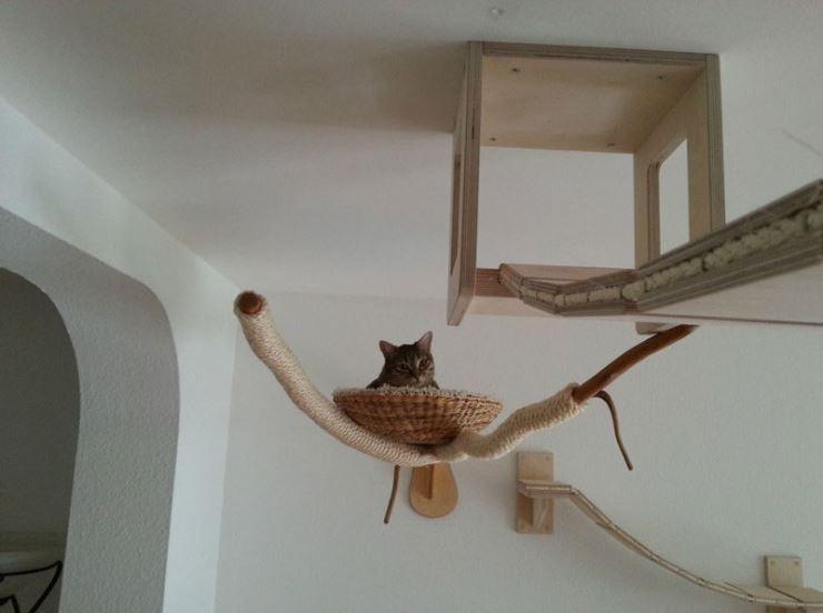 cat-jungles-5
