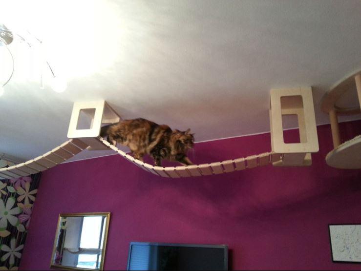 cat-jungles-6