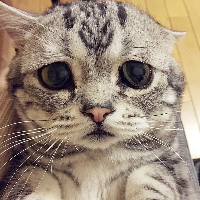 saddest-cat-luhu-maggie-1