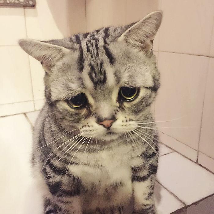 saddest-cat-luhu-maggie-12