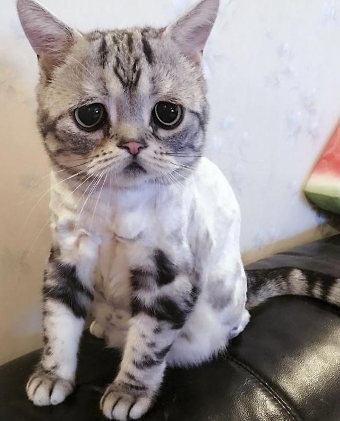 saddest-cat-luhu-maggie-13
