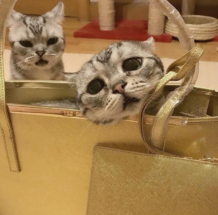 saddest-cat-luhu-maggie-16