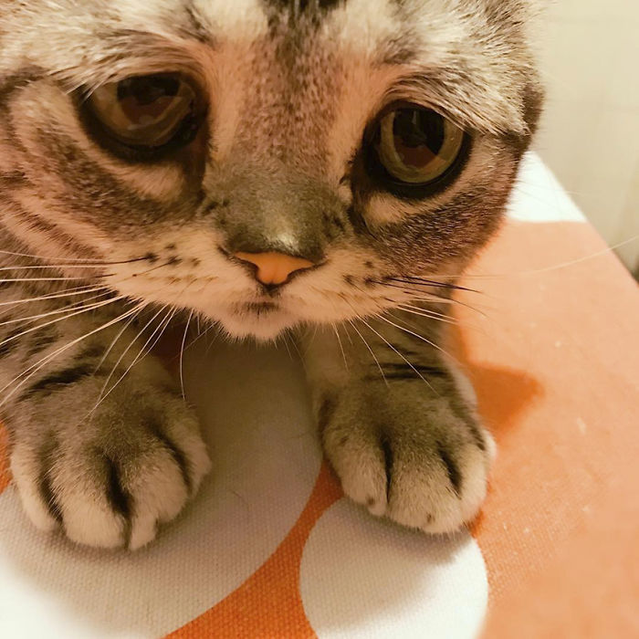 saddest-cat-luhu-maggie-18