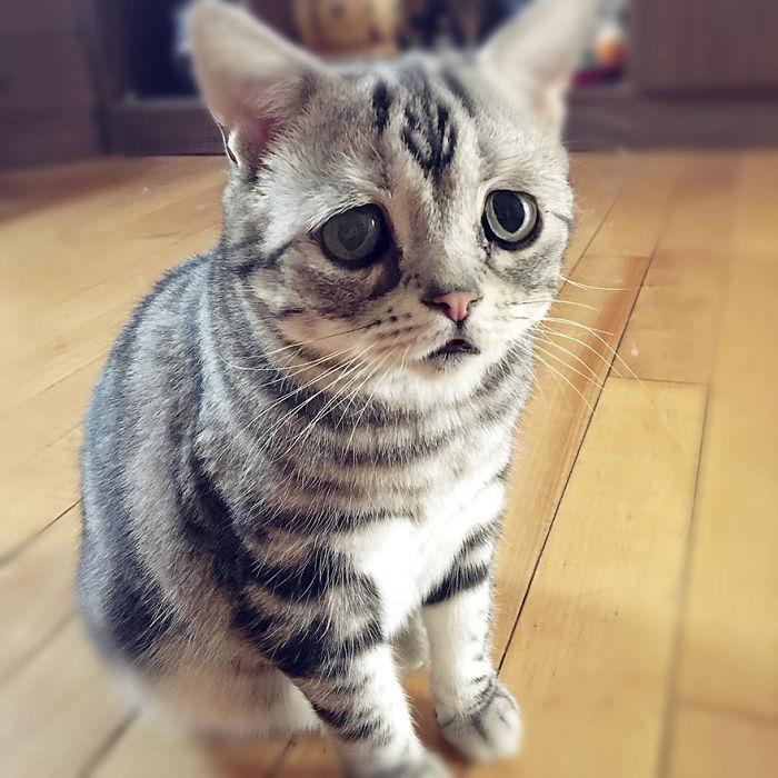 saddest-cat-luhu-maggie-20