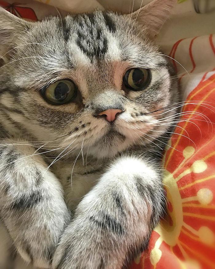 saddest-cat-luhu-maggie-21