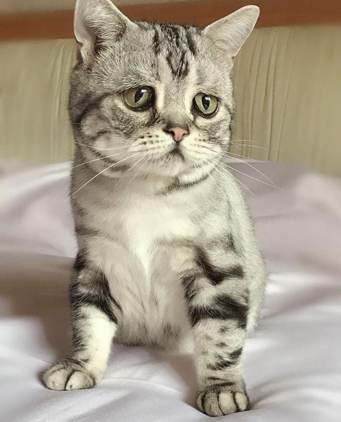 saddest-cat-luhu-maggie-24