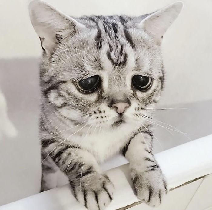 saddest-cat-luhu-maggie-3