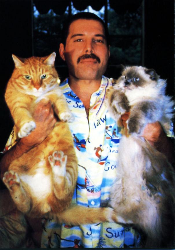 freddie-mercury-cats-2