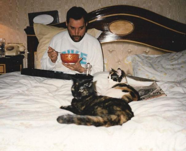 freddie-mercury-cats-8