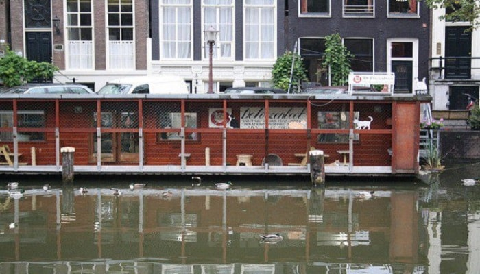 Thecatboat5