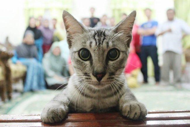 cat-photo-bomb-17