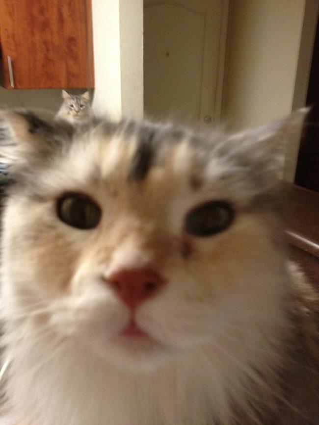 cat-photo-bomb-19