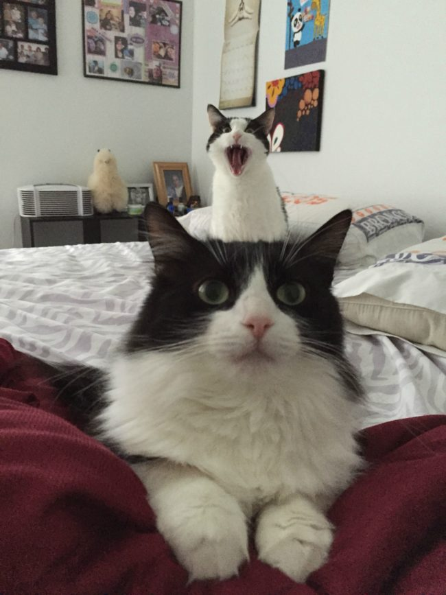 cat-photobomb-12