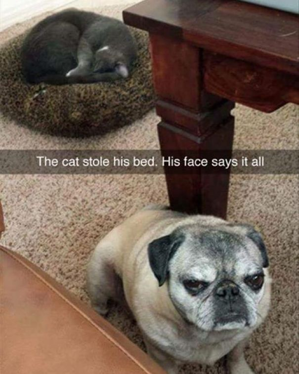 cats-dogs-not-getting-along-hate-living-together-12