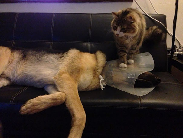 cats-dogs-not-getting-along-hate-living-together-14