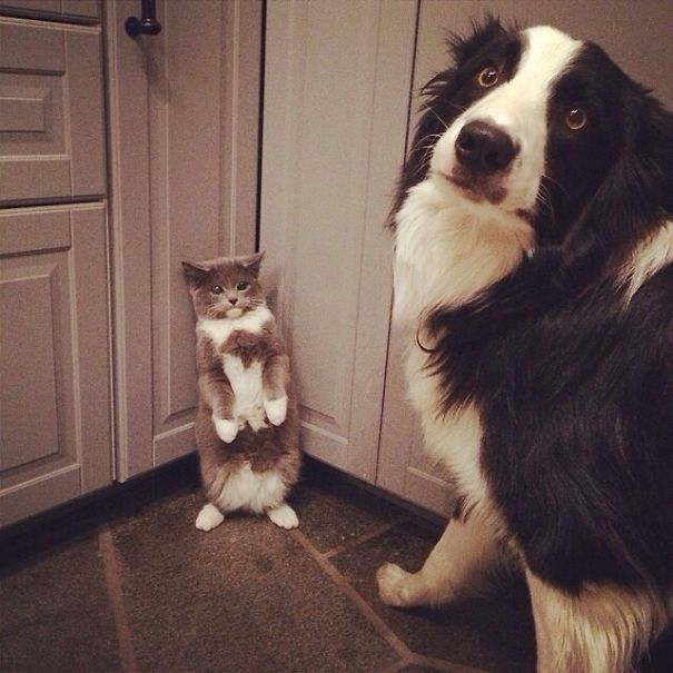 cats-dogs-not-getting-along-hate-living-together-19