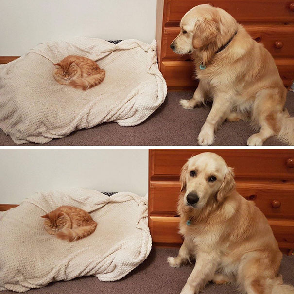 cats-dogs-not-getting-along-hate-living-together-7
