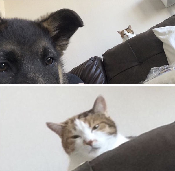 cats-dogs-not-getting-along-hate-living-together-8