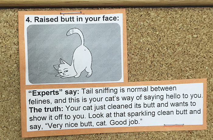 vet-cat-explanations-4