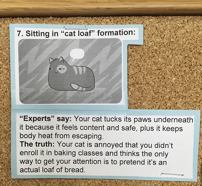 vet-cat-explanations-7